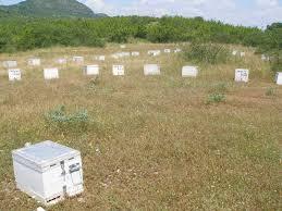 Αποτέλεσμα εικόνας για ΚΥΨΕΛΕς μεταφορα και τοποθετηση μελι ληθαιον