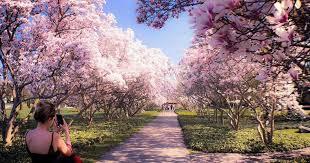 niagara s magnolia alley in ontario
