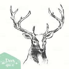 эскиз изображением головы оленя обращается вектор винтаж иллюстрация