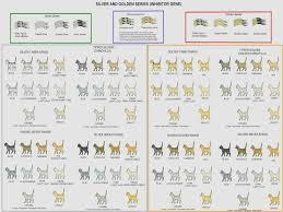 Sphynx Cat Color Chart Sphynx Color Chart Sphynxlair Sphynx Cat Color Chart