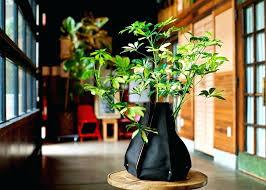 indoor pots for plants large indoor plant pots uk