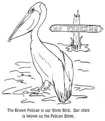 Small Picture Pelican coloring page Pelican free printable coloring pages animals