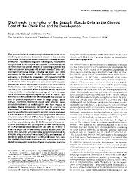 Pdf Cholinergic Innervation Of The Smooth Muscle Cells In