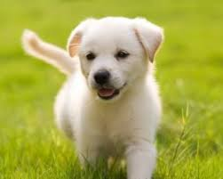 cute puppy wallpaper for computer. Modren Computer Also Take A Look To The Best Size Of Puppies Pictures Here In Hd Quality  For Your Computer Ipad Mini Android Phone SmartphoneIpod And Tablet For Cute Puppy Wallpaper Computer C