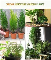 find out the top recommended plants for indoor miniature gardens