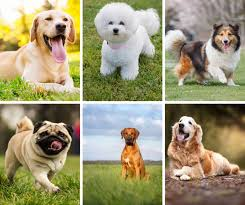 Dog Breed Compatibility Chart 16 Of The Best Dog Breeds For Kids And Families
