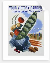 your victory garden poster by corbis