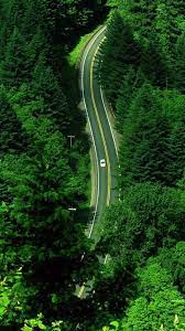 Free download Green Forest iPhone 6 ...