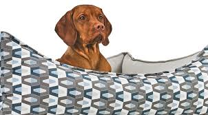 bowsers pet products. Fine Pet Bowsers Pet Products And I