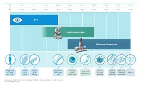 Microscope Magnification Chart Resolving Power Of Microscopes Science Learning Hub