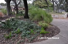 How to green up your winter garden in central Texas - Digging