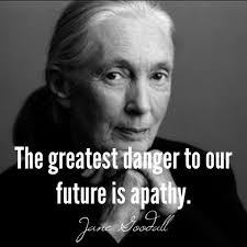 Jane Goodall Quotes Unique Image Result For Jane Goodall Quotes Quotes Pinterest Jane