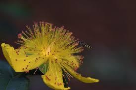 Bestäubung Biene Aaron Bart - Kostenloses Foto auf Pixabay