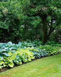 Small Picture Hosta Design 101 Garden Bulb Blog Flower Bulbs Garden Tips