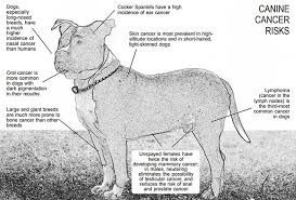 Canine Lymphoma Symptoms The Canine Cancer Crisis Whole Dog Journal