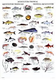 Hawaiian Fish Names List View Entire Poster Pet Fish