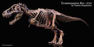Image result for t rex bone