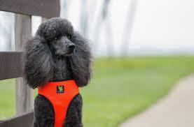 The Original Ecobark Control Dog Harness No Pull No Choke
