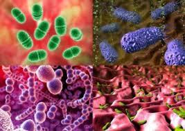 Бактерии под микроскопом usb su рефераты контрольные  Бактерии под микроскопом