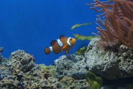Image result for poisson dans un aquarium