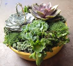 Small Picture DIY Succulent Container Designs 3 tips to create your own Sloat