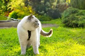 here s how to train a cat to do 5 life changing things