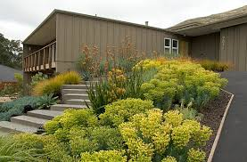 View in gallery Stunning yellow plants in a modern front yard