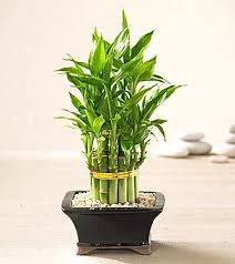 feng shui plant office. Not Only Are Plants Gorgeous To Look At, They Can Also Assist In Creating A Positive Flow Of Energy The Home Or Office. Will This Blog Help You Feng Shui Plant Office