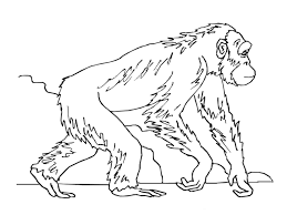 Small Picture Ape Coloring Pages GetColoringPagescom