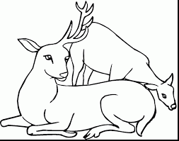 outstanding deer hunting coloring pages with deer coloring page ...