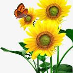 sunflowers massage massage sundbyberg