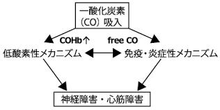 ヘモグロビンが役に立たないだけではない一酸化炭素中毒 一酸化炭素が