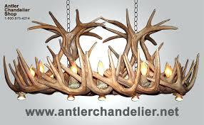 chandeliers antler chandelier net reion whitetail chandelier with optional antler chandeliernet