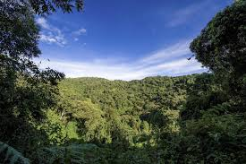 organizing an essay kaziranga national park