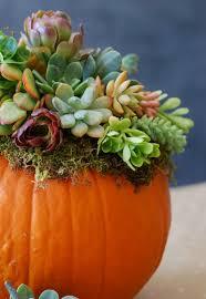 Pumpkin Succulents Decor For Fall