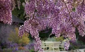 The BEST Las Vegas Backyard Garden  5 AMAZING Plants For Desert Good Trees For Backyard
