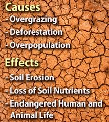 causes and effects of desertification global business class  causes and effects of desertification