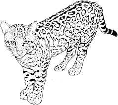 Big Cat Coloring Pages Big Cat Coloring Pages For Kids Accidental On