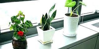 Plants for office cubicle Office Space Best Cool Desk Plants Reddit Office Cubicle Online Doragoram Best Cool Desk Plants Reddit Office Cubicle Online Tedxgustavus