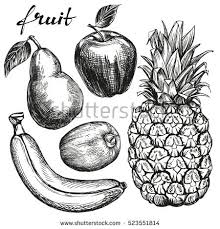 apple fruit drawing realistic. fruit set pear, apple, banana, kiwi, pineapple hand drawn vector illustration realistic apple drawing