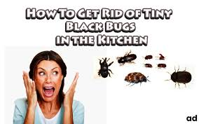 kitchen bugs how to get rid of tiny