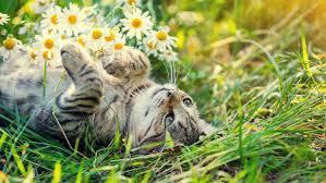 cat repellent for garden. 11 Ways To Deter Unwanted Cats From Venturing Into Your Garden Cat Repellent For U