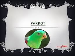 an essay on parrot for kids in english language  an essay on parrot for kids in english language