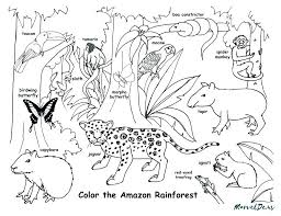 Rainforest Animal Coloring Pages Tropical Jungle And Animals