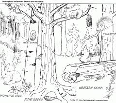 Forest Coloring Pages Page Free Printable Adult Fores On