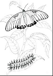 Very Hungry Caterpillar Butterfly Coloring Page The Pages Printable