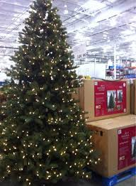 Interesting Decoration Christmas Tree 9ft Costco Prices Fake Christmas Tree Prices