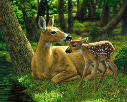 deer painting whitetail deer first spring by crista forest