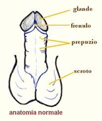 Risultati immagini per glande