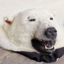chair beautiful fake bear skin rug with head the best foot polar bearskin world picture for